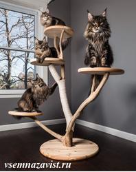 Кошачье дерево №1
