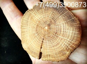 Спил дуба нешлифованный 4-10 см