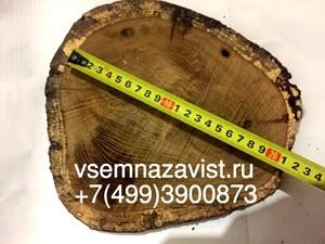 Спил дуба нешлифованный 16-20 см