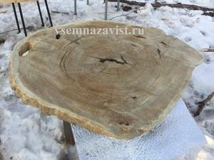 Спил дуба большого диаметра 1,1 метр