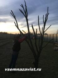Ствол дерева с ветками