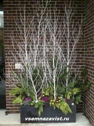 Ветки дерева 130-180